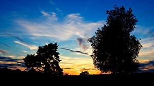 Картинки Небо Силуэт Дерево Природа