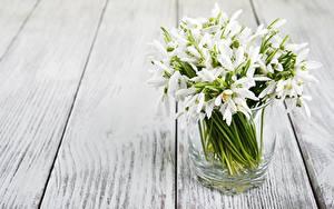 Обои Галантус Стакане Доски цветок