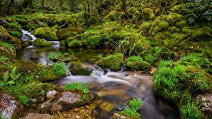 Фотографии Испания Камни Ручей Мха Galicia Природа