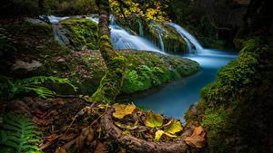 Картинка Испания Водопады Осенние Мох Листья Cascada de Saseta Природа