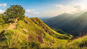 Фотографии Шри-Ланка Горы Деревья Природа