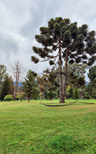 Картинка Шри-Ланка Парки Газон Деревья Queen Victoria Park