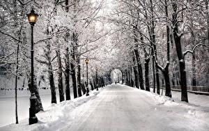 Фотография Санкт-Петербург Зимние Парки Аллея Деревьев Снегу Природа