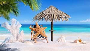 Обои Морские звезды Ракушки Пляжи Песок Шезлонг Зонт Природа