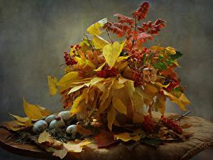 Фото Натюрморт Осень Грибы природа Рябина Листья