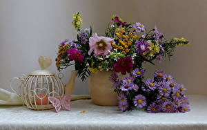 Фотография Натюрморт Букеты Астры Космея Чайник Свечи Бабочки цветок