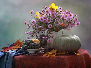 Картинка Натюрморт Букеты Астры Тыква Виноград Продукты питания Цветы