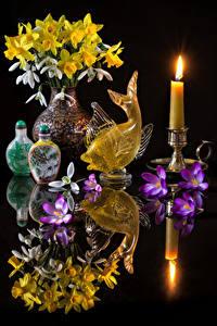 Фотография Натюрморт Нарциссы Галантус Первоцвет Свечи Рыбы Черный фон Отражение Ваза Цветы