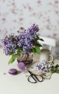 Картинки Натюрморт Сирень Вазе Макарон Ветвь Чашка цветок Еда