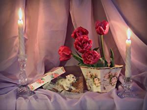 Фотография Натюрморт Тюльпаны Свечи Вазе Красных Цветочный горшок Цветы