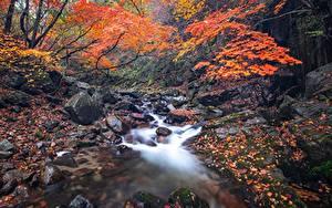 Фотографии Камни Осенние Ручеек Листва Мхом Природа