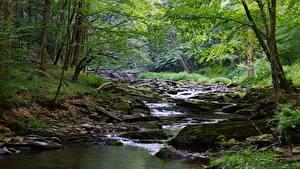 Фотографии Камень Леса Штаты Речка Ручей Мох West Virginia, Monongahela river Природа