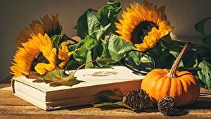 Обои Подсолнечник Тыква Натюрморт Книга Очках Шишка Листья цветок
