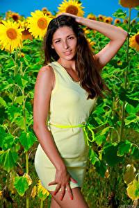 Картинки Подсолнечник Платье Руки Взгляд Rosella RU 98