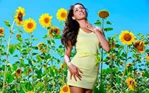 Картинка Подсолнечник Платья Поза Взгляд Rosella RU 98