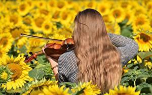 Фотографии Подсолнечник Скрипка Поля Волос Вид сзади Шатенки девушка