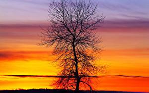 Фото Рассвет и закат Дерево Силуэты Природа