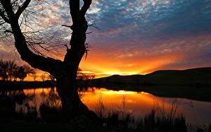 Фотография Рассвет и закат Озеро Небо Деревья Силуэт Природа