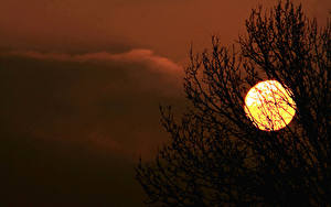 Картинки Рассвет и закат Силуэты Солнце Ветки Природа