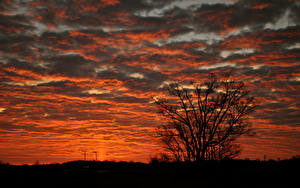 Фотография Рассвет и закат Силуэта Ветвь Облако Природа