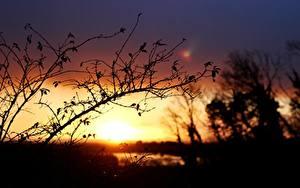 Картинки Рассветы и закаты На ветке Силуэта Природа
