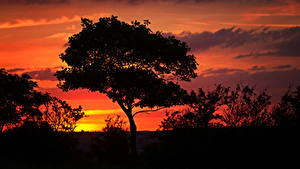 Фотографии Рассветы и закаты Силуэт Дерева Природа