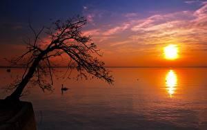 Обои Рассветы и закаты Озеро Деревья Силуэт Солнце Горизонта Природа