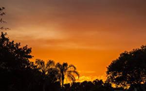 Обои Рассветы и закаты Силуэты Пальма Природа