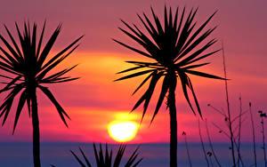 Фото Рассветы и закаты Пальмы Силуэты Солнца Природа