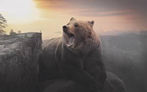 Фотография Рассвет и закат Медведи Бурые Медведи Скале Животные