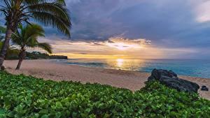 Фото Рассветы и закаты Побережье Тропики Пальмы Пляж Reunion, Indian ocean
