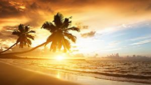 Обои для рабочего стола Рассветы и закаты Берег Тропический Море Пальма Природа
