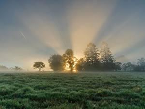 Фотографии Рассветы и закаты Луга Утро Туман Лучи света Траве Дерева