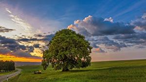 Картинки Рассветы и закаты Луга Небо Дерева Природа
