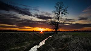 Фотографии Рассвет и закат Луга Ручеек Дерево Траве Солнце