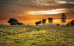 Фото Рассвет и закат Луга Дерево Траве Природа