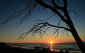 Фото Рассветы и закаты Море Деревьев Ветки Солнце Силуэта Природа