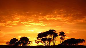 Фото Рассветы и закаты Небо Деревья Силуэт Природа
