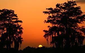 Обои Рассветы и закаты Солнце Силуэта Деревья Природа