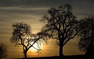 Картинки Рассвет и закат Дерево Силуэта