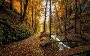Картинки Швейцария Осень Леса Ручеек Дерева Листва