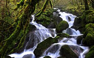 Картинка Швейцария Леса Водопады Камень Мох Ручей Soubey Природа