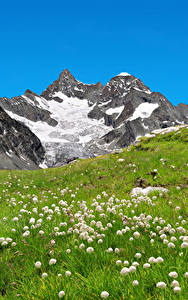 Обои Швейцария Горы Одуванчики Альпы Трава