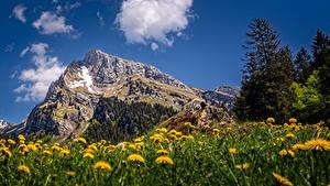 Фото Швейцария Гора Одуванчики Скала Альпы Облако Altmann, Toggenburg Природа