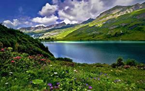 Картинка Швейцария Горы Озеро Траве Облака Альпы Engstlensee Природа