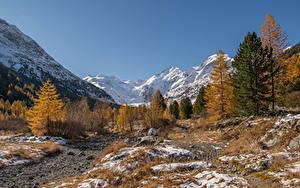 Фото Швейцария Горы Альпы Дерева Morteratsch Природа