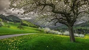 Фотографии Швейцария Гора Дороги Одуванчики Пейзаж Деревья Трава Облака Waldenburg, Basel-Land Природа