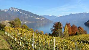 Картинка Швейцария Пейзаж Озеро Горы Осень Кусты Lake Thun Природа