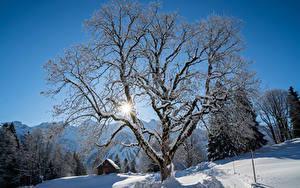 Фото Швейцария Зима Здания Снег Деревья Лучи света Braunwald Природа