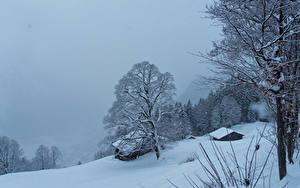 Картинка Швейцария Зимние Здания Снег Деревья Braunwald Природа